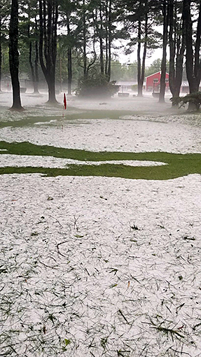 hail stones and pine needles at hole